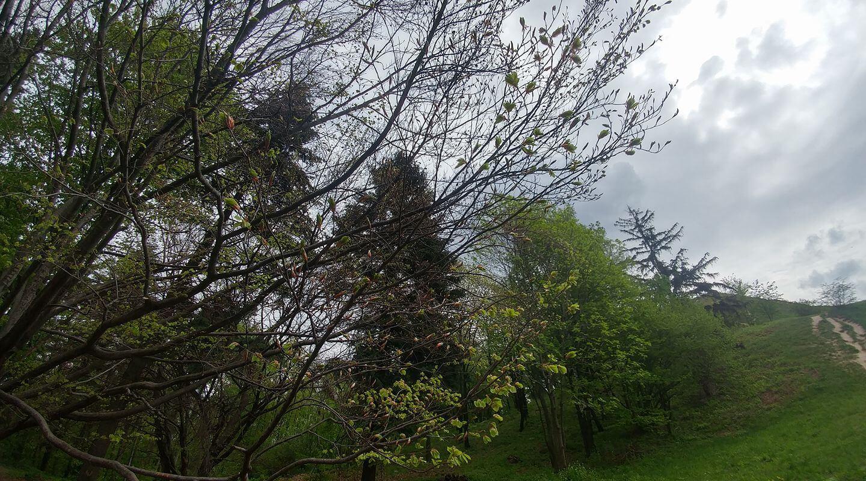 עצים מבעל לענף