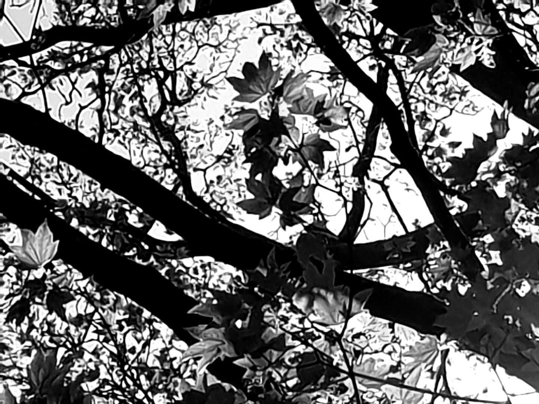 שקט של עלים בשחור ולבן